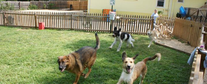 Home boarding of dogs pic