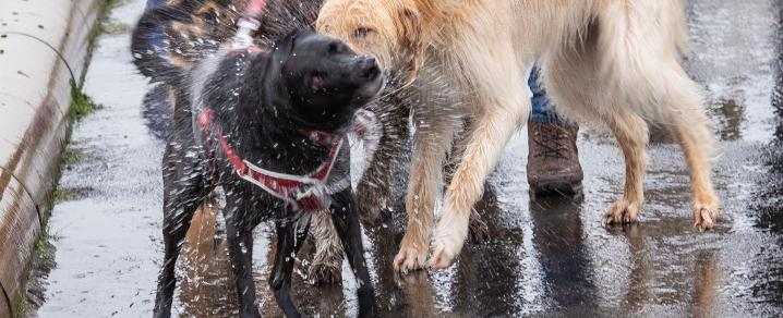 Wet dogs at Pooches in the Park