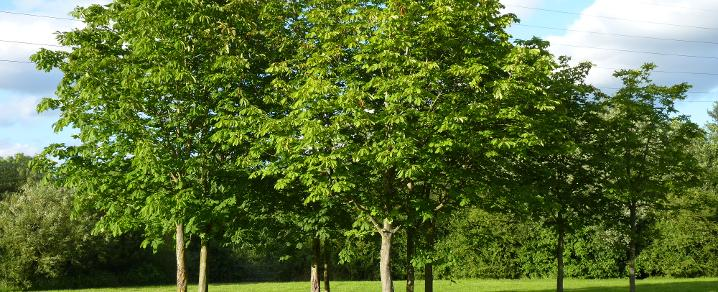trees information and advice renfrewshire website